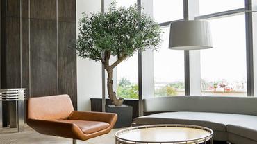 Oliivipuu on Green4Ever'i nädala taim!