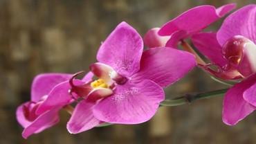 Orhidee on aprillikuu viimane nädala taim