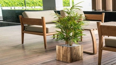 Järgmiseks nädala taimeks on bambus!