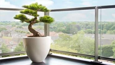 Huvitav ja elegantne bonsai