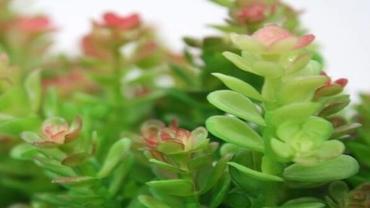 Sukulent – mis taim see on?
