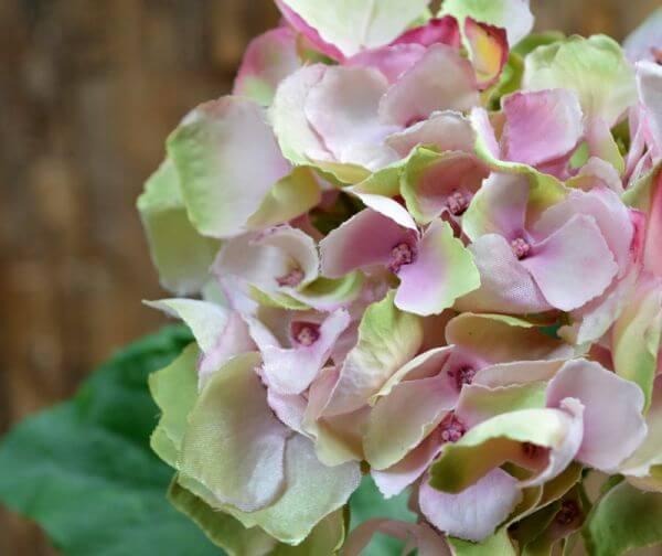 roosa kunst-hortensia
