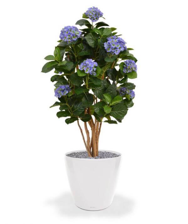 sinine kunst-hortensia
