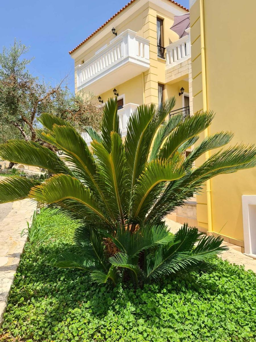 palmlehik