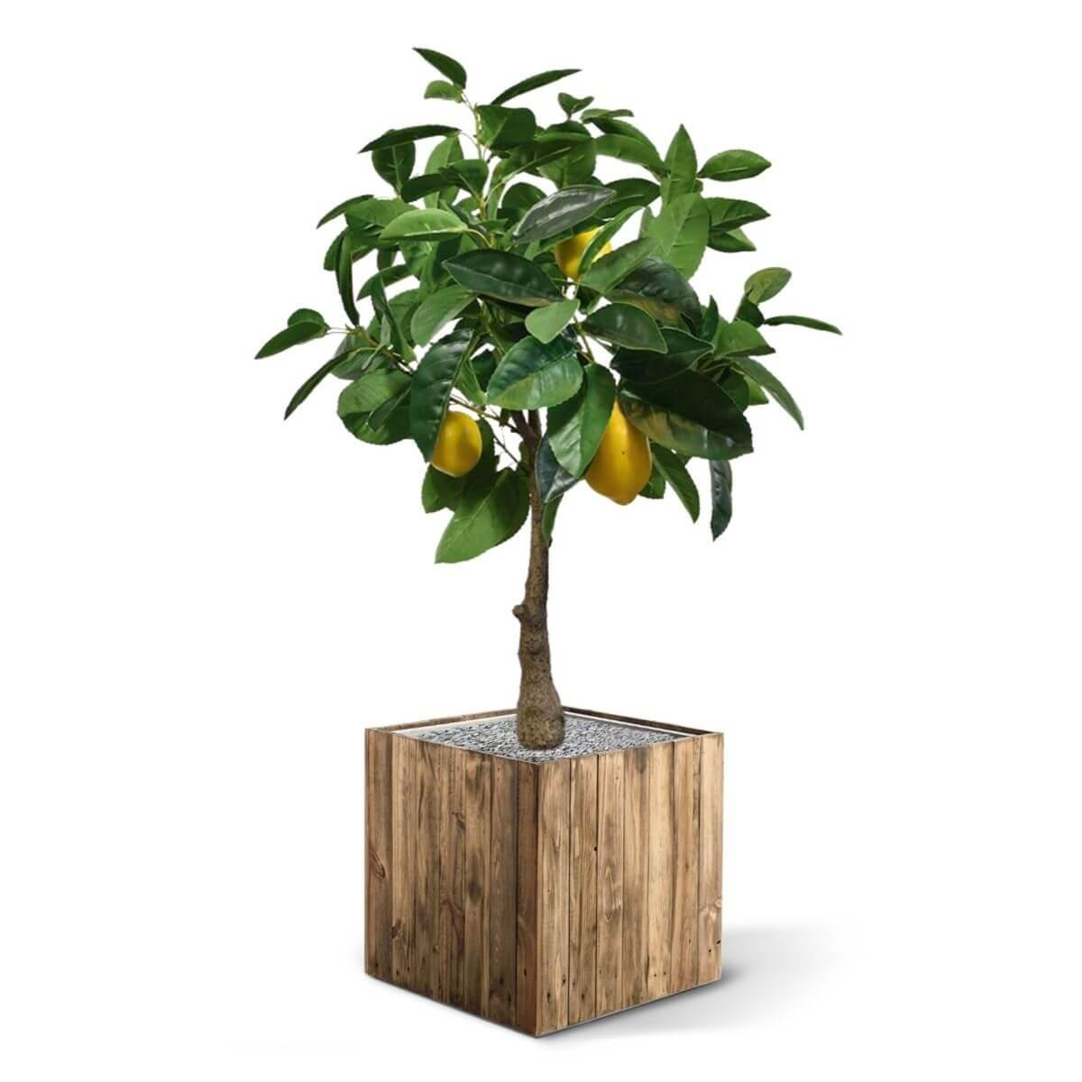 kunstpuu sidrunipuu