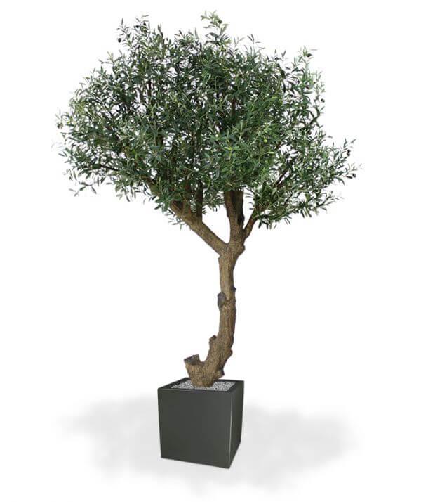 kunst-oliivipuu