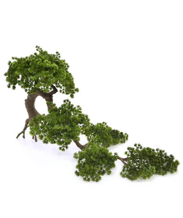 kunstpiinia bonsai