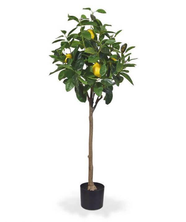 kunst-sidrunipuu