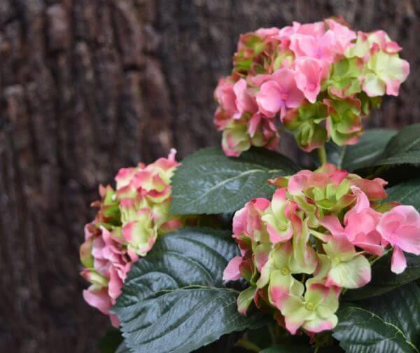 Kunst-hortensia