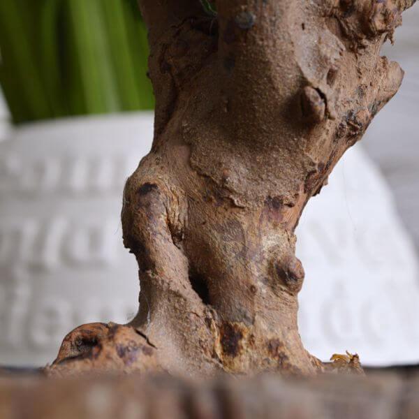 kunst-hortensia tüvi