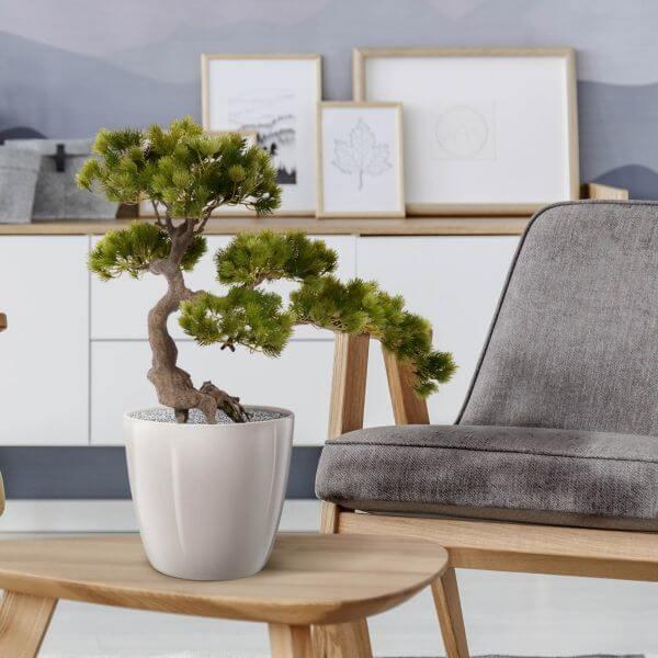 kunsttaim bonsai