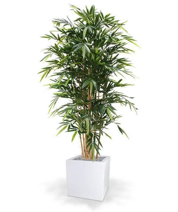 kunst-bambus