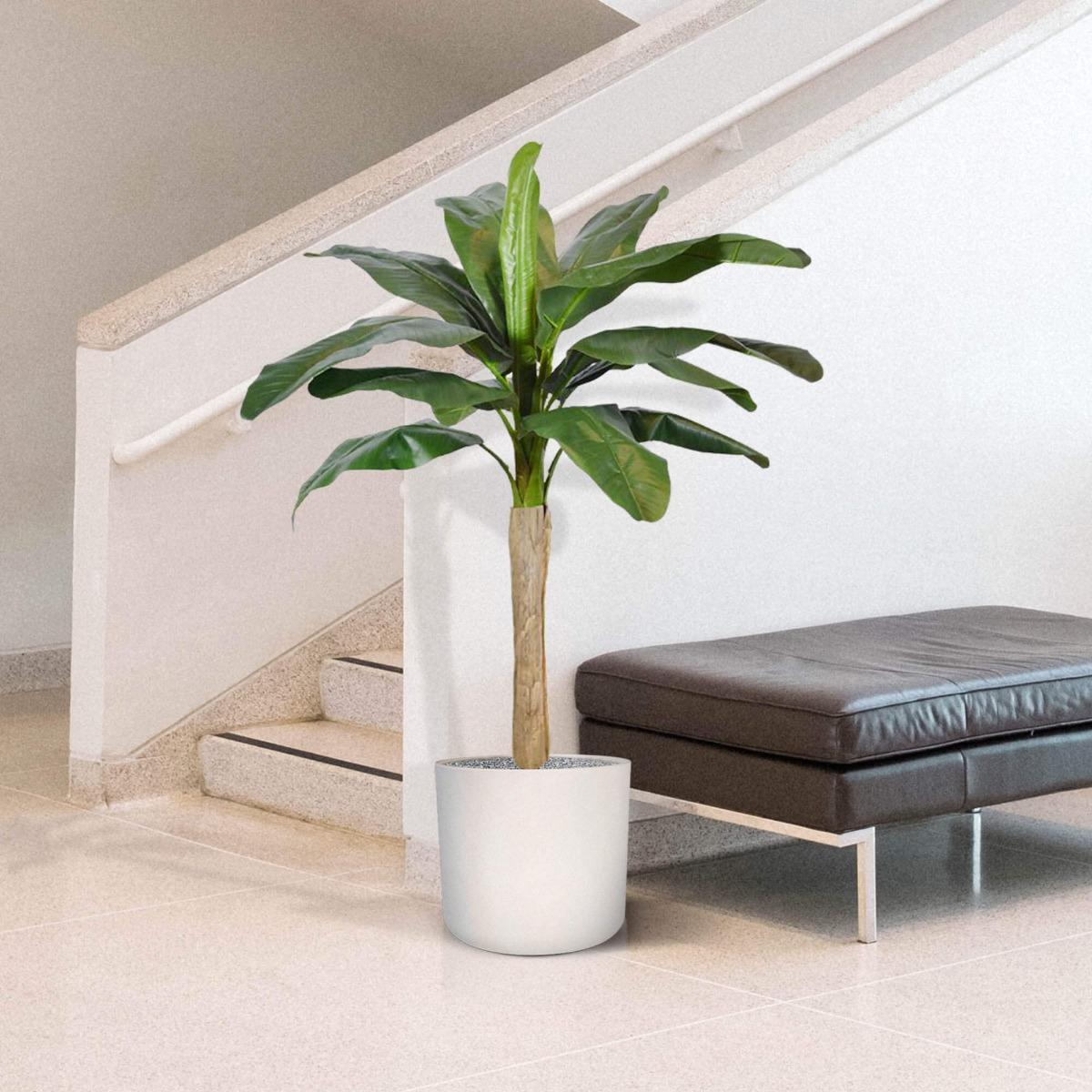 elutruu banaanipuu