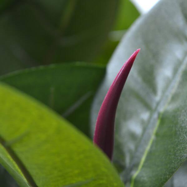 kunstfilodendron