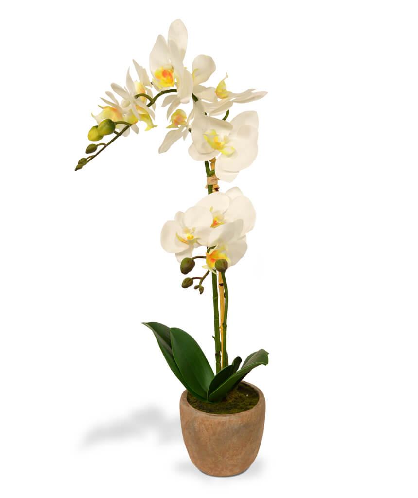 kunst-orhidee