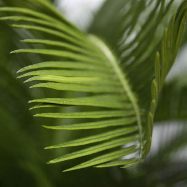 kunsttaim palmlehik